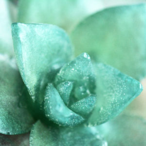 Pine Forest Succulent Soap by Tailored Soap